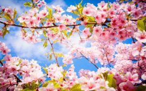 Your Spring Checklist